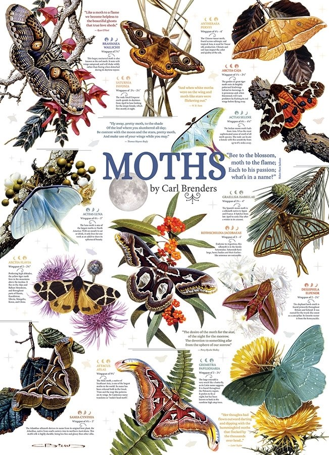 Moth Collection - 1000pc Jigsaw Puzzle by Cobble Hill  			  					NEW