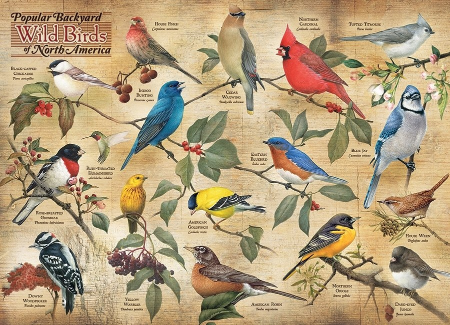 Popular Backyard Wild Birds of North America - 1000pc Jigsaw Puzzle by Cobble Hill  			  					NEW