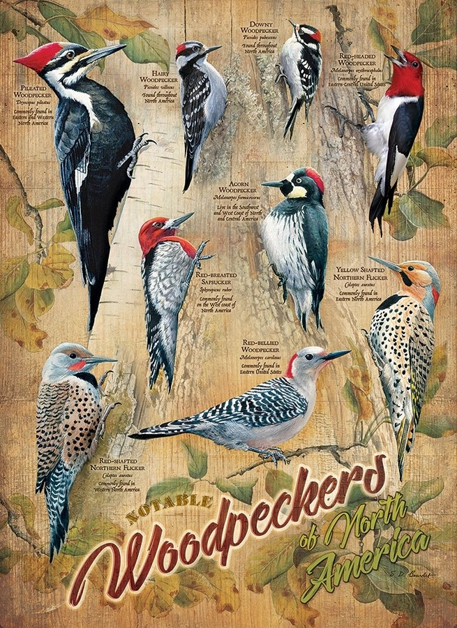 Notable Woodpeckers - 500pc Jigsaw Puzzle By Cobble Hill  			  					NEW