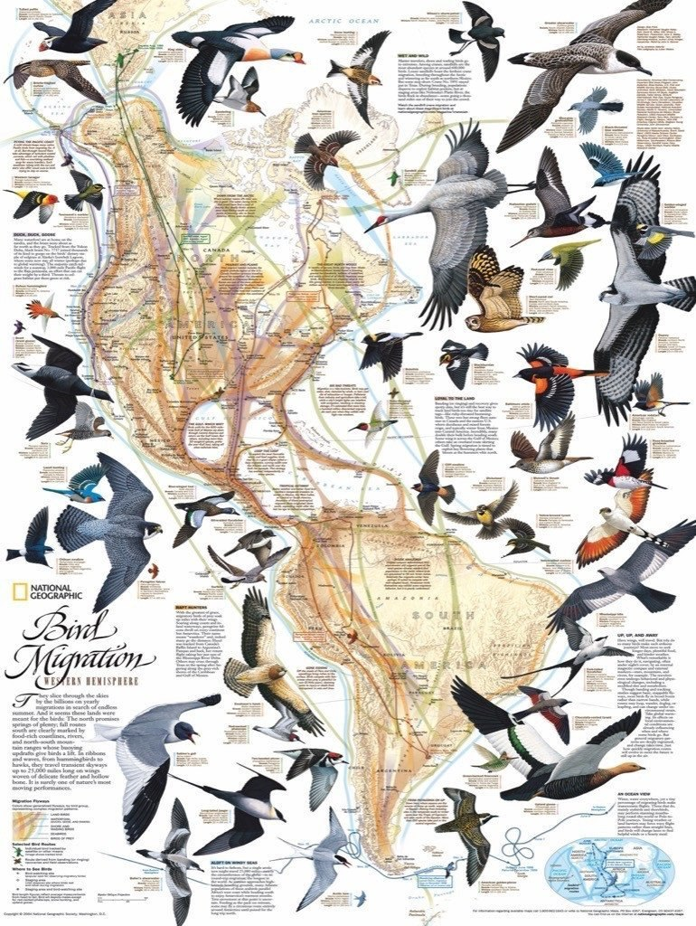 Bird Migration - 1000pc Jigsaw Puzzle by New York Puzzle Company  			  					NEW