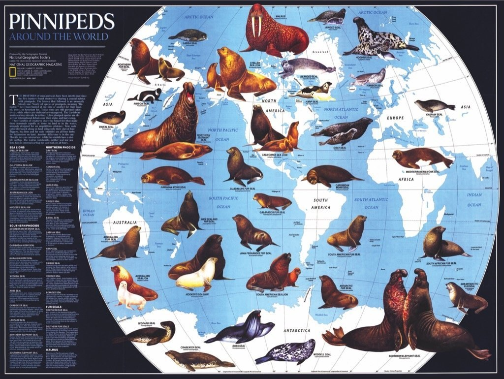 Pinnipeds - 1000pc Jigsaw Puzzle by New York Puzzle Company  			  					NEW