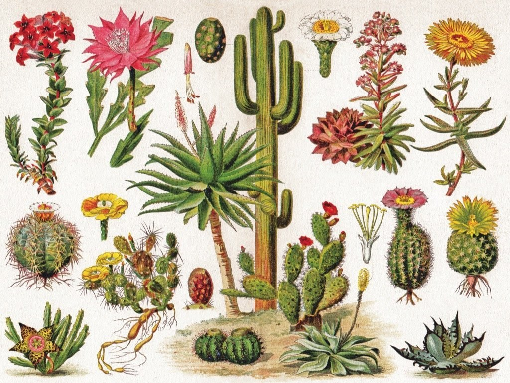 Cacti ~ Cactus - 1000pc Jigsaw Puzzle by New York Puzzle Company  			  					NEW