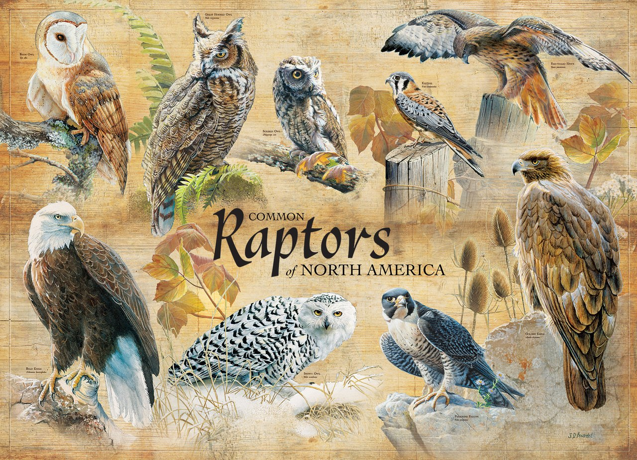 Common Raptors - 1000pc Jigsaw Puzzle by Cobble Hill  			  					NEW
