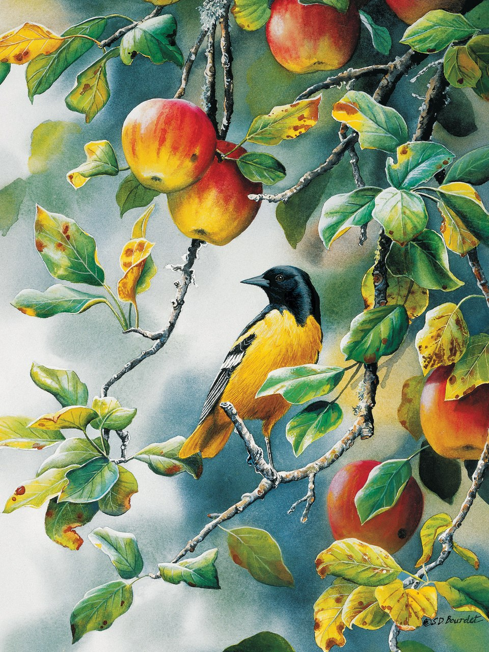 Northern Oriole - 1000pc Jigsaw Puzzle by Cobble Hill  			  					NEW