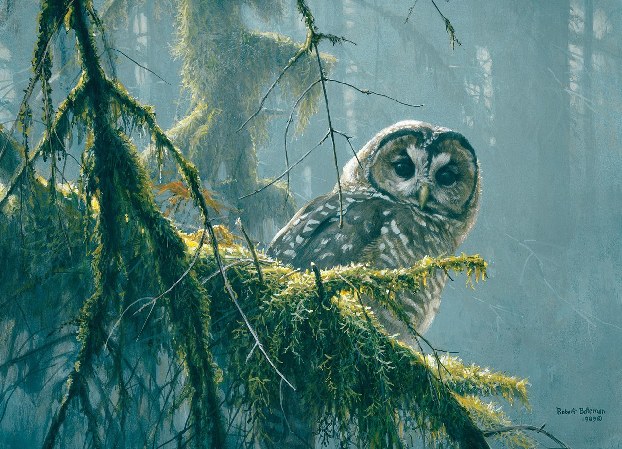 Mossy Branches, Spotted Owl - 500pc Jigsaw Puzzle By Cobble Hill  			  					NEW