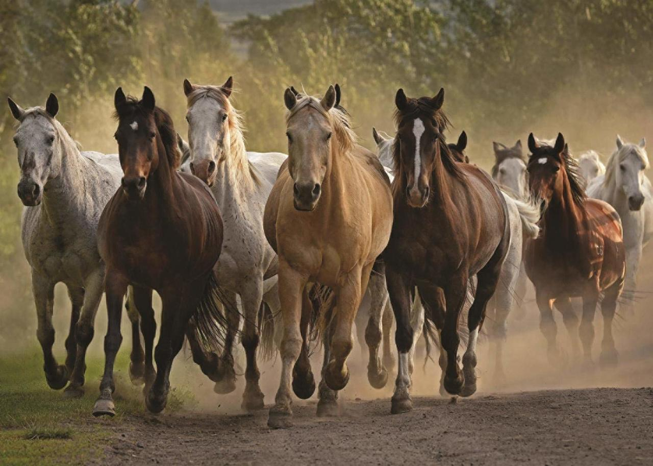 Team of Horses - 1000pc Jigsaw Puzzle By Jumbo  			  					NEW