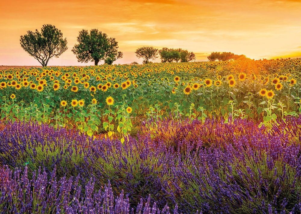 Fields of Sunflowers and Lavender - 1500pc Jigsaw Puzzle by Educa  			  					NEW