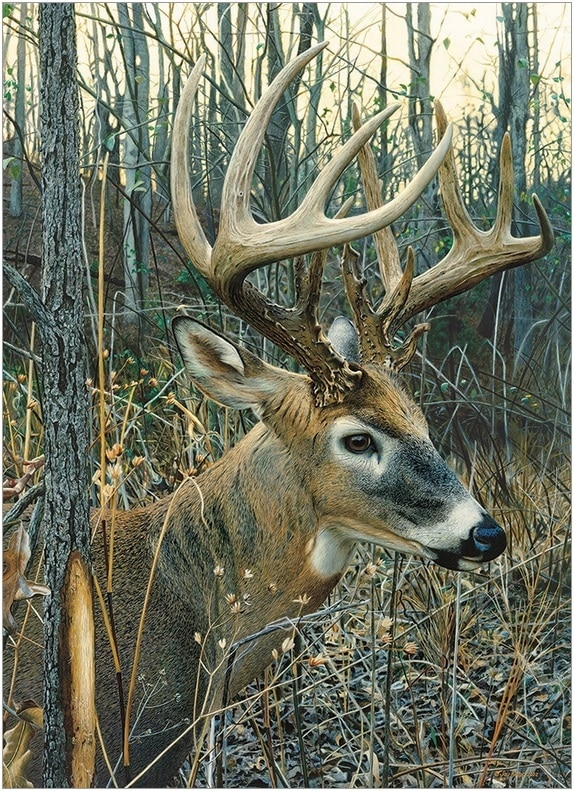 White-tailed Deer - 1000pc Jigsaw Puzzle By Cobble Hill  			  					NEW
