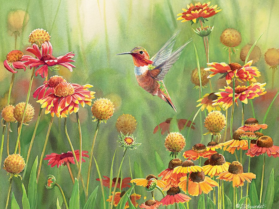 Rufous Hummingbird - 500pc Jigsaw Puzzle By Cobble Hill  			  					NEW