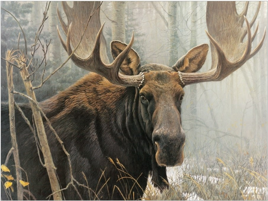 Bull Moose - 500pc Jigsaw Puzzle By Cobble Hill  			  					NEW