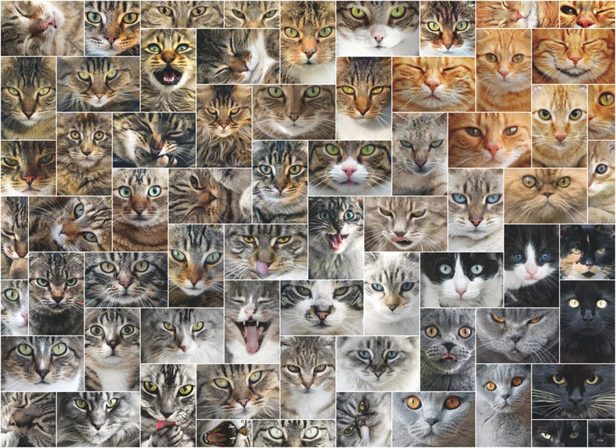 Cat Faces - 1000pc Jigsaw Puzzle By D-Toys  			  					NEW