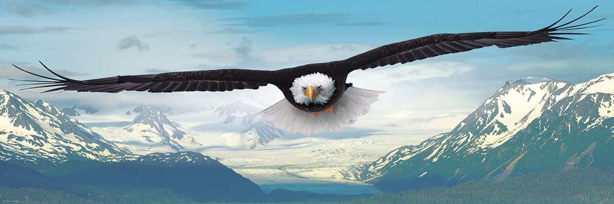 Eagle - 1000pc Jigsaw Puzzle by Eurographics