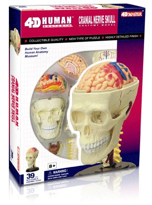 Human Cranial Nerve Skull - 39pc 4D Human Anatomy Educational Puzzle