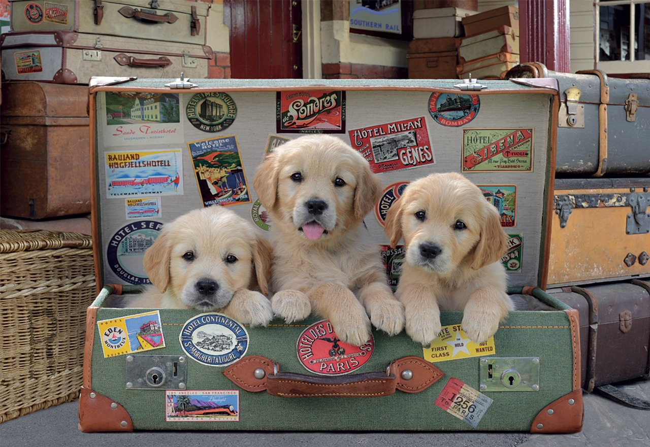 Puppies in the Luggage - 500pc Jigsaw Puzzle by Educa  			  					NEW