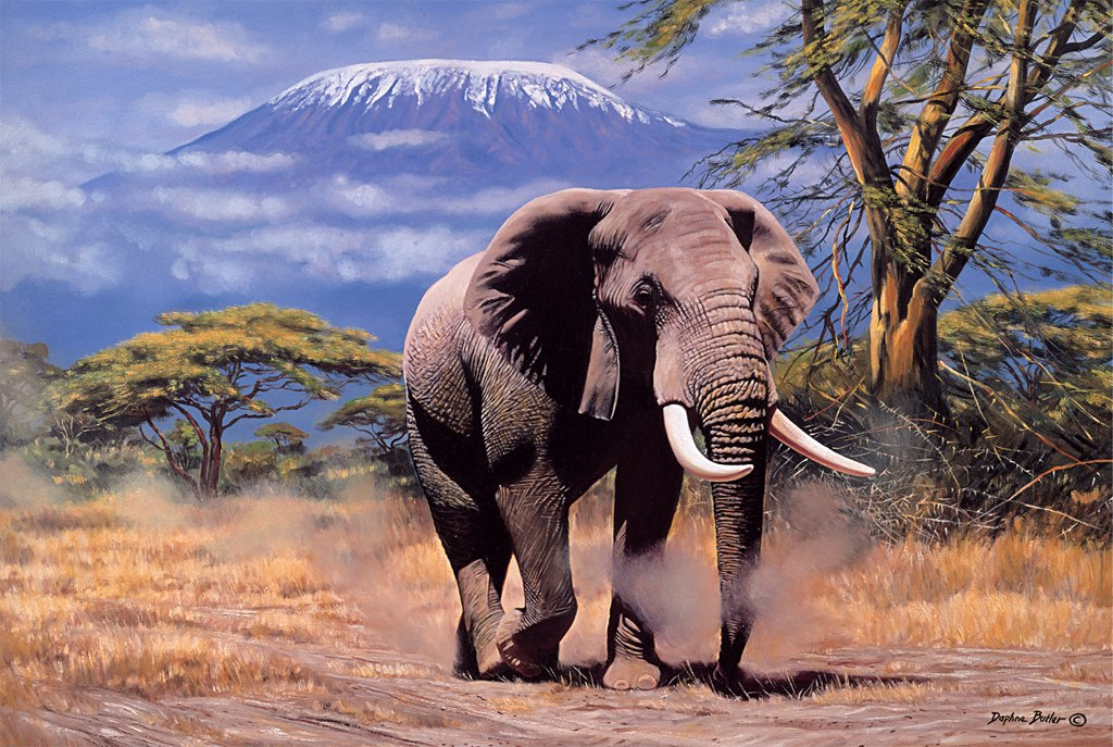 Elephant In Amboseli - 1000pc Jigsaw Puzzle by Tomax