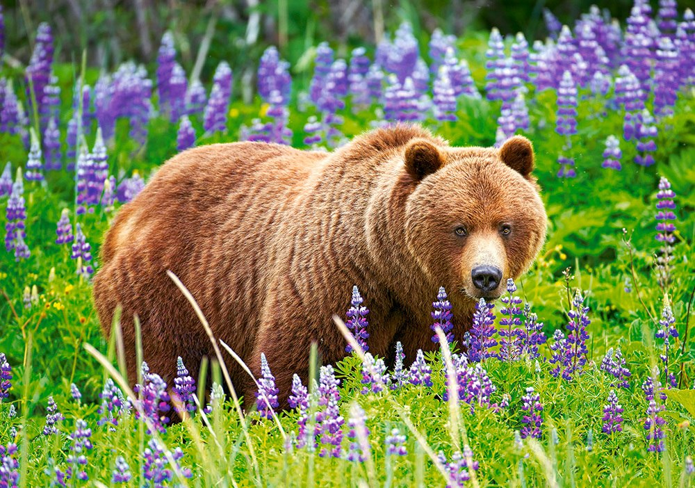 Bear on the Meadow - 500pc Jigsaw Puzzle by Castorland  			  					NEW