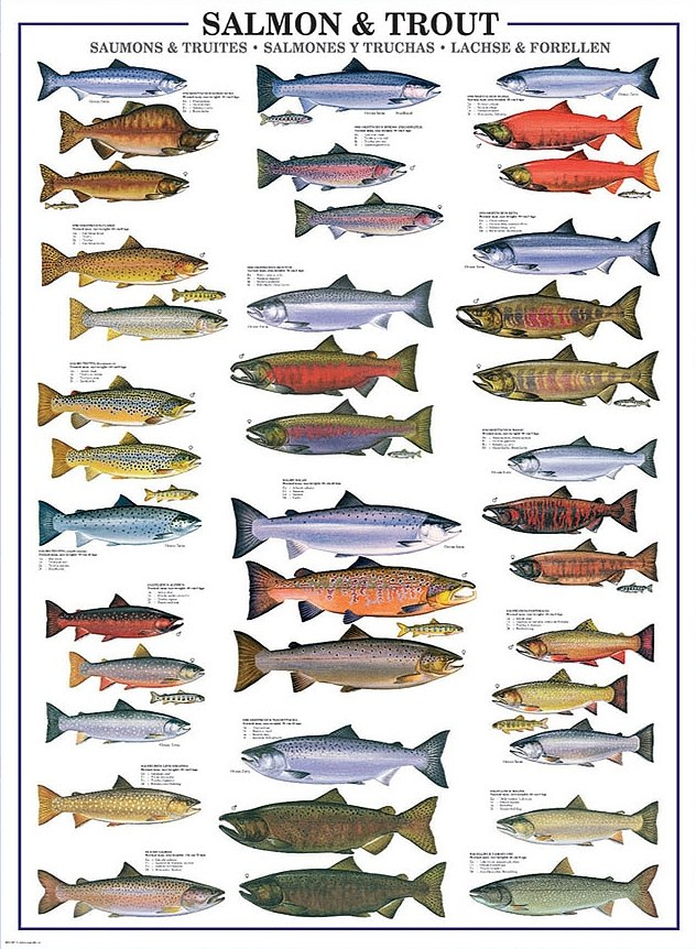 Salmon & Trout - 1000pc Jigsaw Puzzle by Eurographics