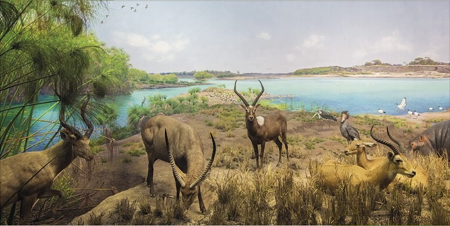 Upper Nile River Diorama - 1000pc Jigsaw Puzzle by Pomegranate  			  					NEW