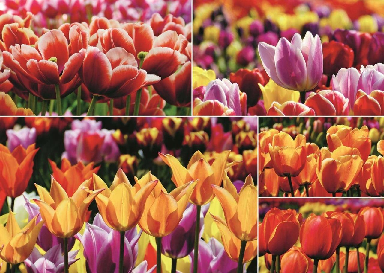 Holland Tulips - 1000pc Jigsaw Puzzle By Jumbo  			  					NEW
