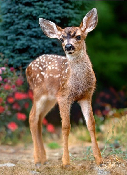 Baby Deer - 120pc Jigsaw Puzzle By Castorland