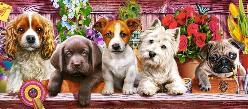 Puppies on a Shelf - 600pc Jigsaw Puzzle By Castorland  			  					NEW