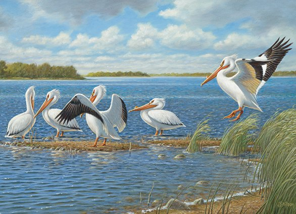 Pelicans - 1000pc Jigsaw Puzzle By Cobble Hill