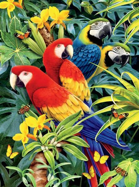Wild: Majestic Macaws - 1000pc Jigsaw Puzzle by Ceaco  			  					NEW
