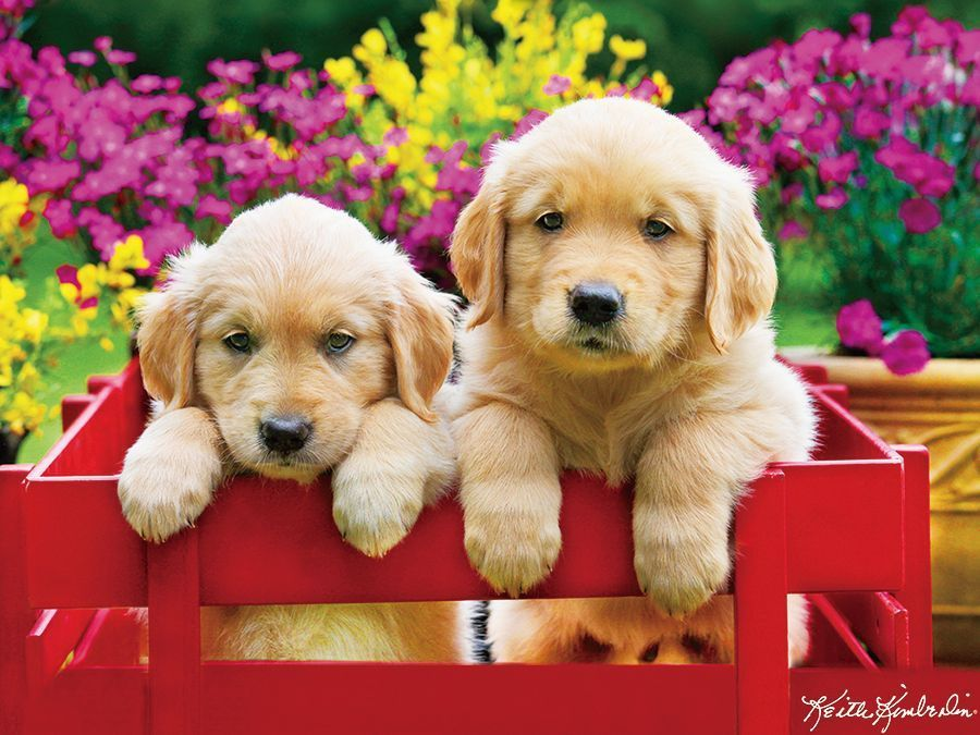 Kodak: Adorable Puppies - 350pc Jigsaw Puzzle by Lafayette Puzzle Factory  			  					NEW