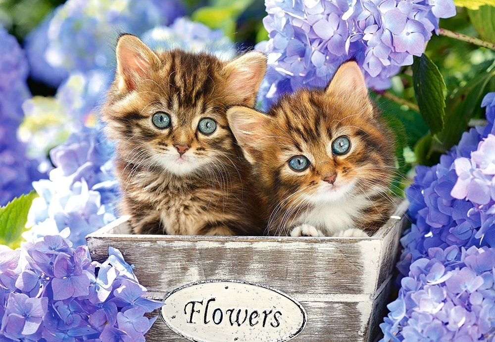 Cute Kittens - 1500pc Jigsaw Puzzle By Castorland  			  					NEW