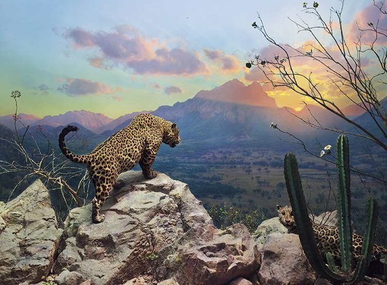 Jaguar Diorama - 1000pc Jigsaw Puzzle by Pomegranate  			  					NEW