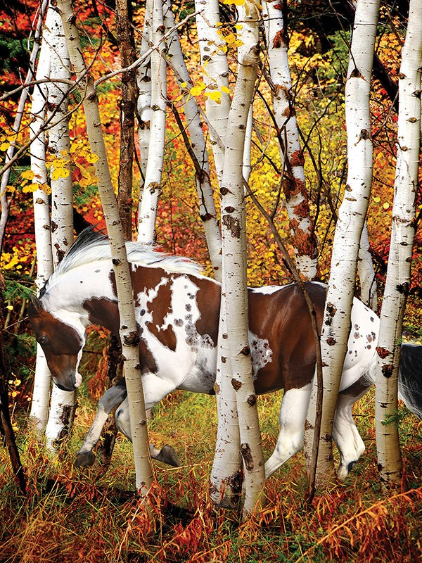 Hideaway Horse - 300pc Jigsaw Puzzle by Lafayette Puzzle Factory