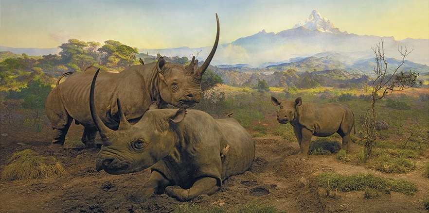 Black Rhinoceros Diorama - 1000pc Jigsaw Puzzle by Pomegranate  			  					NEW