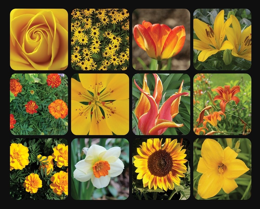 Golden Blooms - 1000pc Jigsaw Puzzle by Springbok