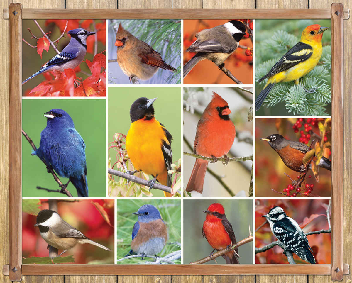 Songbirds - 1000pc Jigsaw Puzzle By Springbok