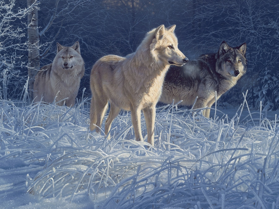 White Gold Wolves - 500pc Jigsaw Puzzle by Cobble Hill