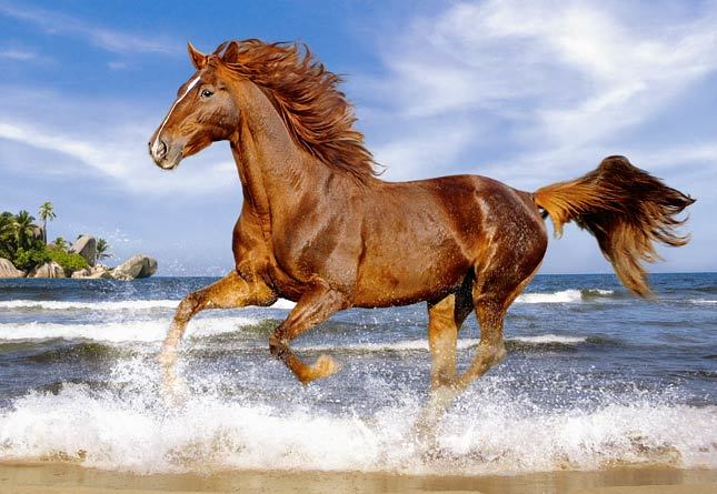 Horse on the Beach - 500pc Jigsaw Puzzle by Castorland