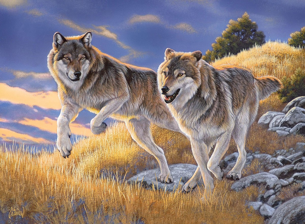 The Wolves - 500pc Jigsaw Puzzle by Clementoni