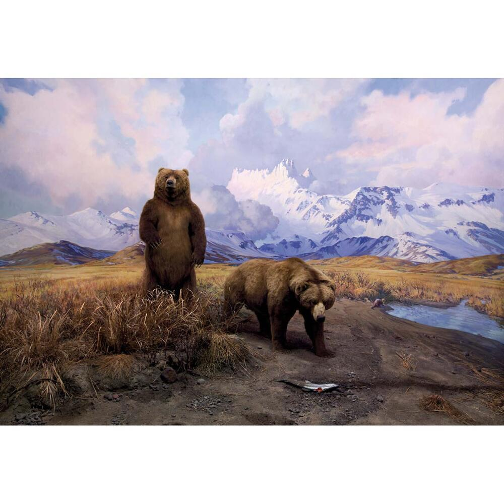 Alaska Brown Bear Diorama - 1000pc Jigsaw Puzzle by Pomegranate  			  					NEW