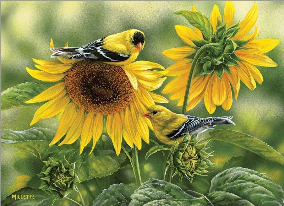 Sunflowers and Goldfinches - 1000pc Jigsaw Puzzle by Cobble Hill  			  					NEW