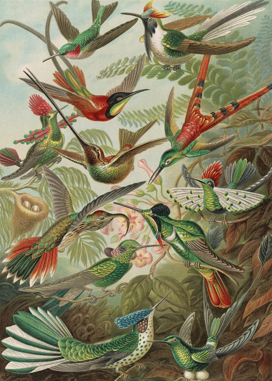 Haeckel: Hummingbirds - 300pc Jigsaw Puzzle by Pomegranate  			  					NEW