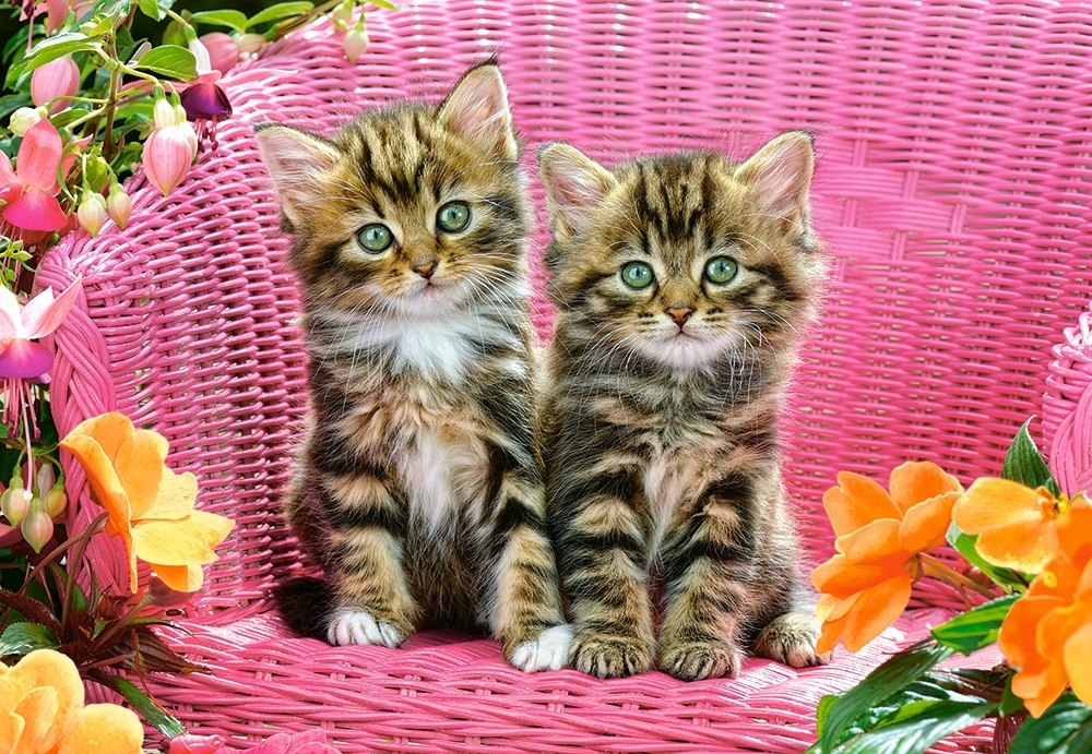 Kittens on Garden Chair - 1000pc Jigsaw Puzzle By Castorland  			  					NEW
